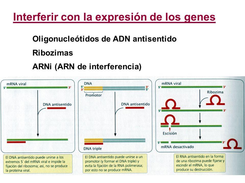 Interferir con la expresión de los genes Oligonucleótidos de ADN antisentido Ribozimas ARNi (ARN de interferencia)