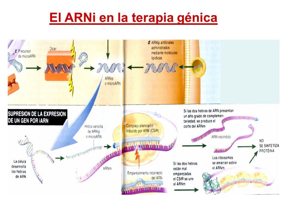 El ARNi en la terapia génica