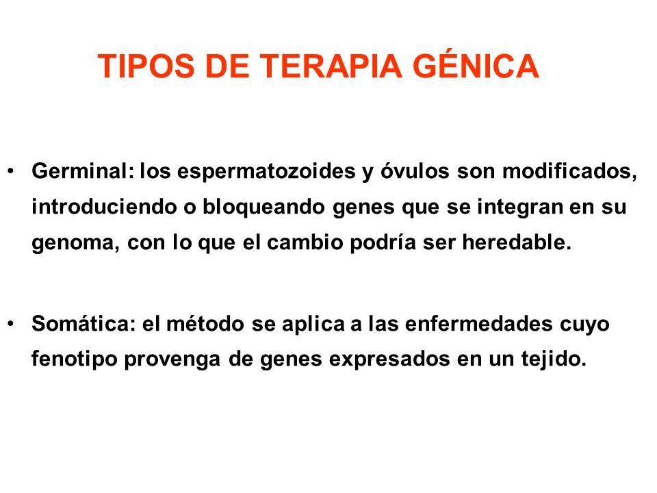 TIPOS DE TERAPIA GÉNICA Germinal: los espermatozoides y óvulos son modificados, introduciendo o bloqueando genes que se integran en su genoma, con lo