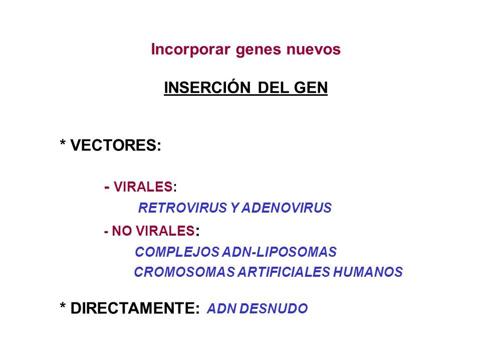 INSERCIÓN DEL GEN * VECTORES: - VIRALES: RETROVIRUS Y ADENOVIRUS -NO VIRALES : COMPLEJOS ADN-LIPOSOMAS CROMOSOMAS ARTIFICIALES HUMANOS * DIRECTAMENTE: ADN DESNUDO