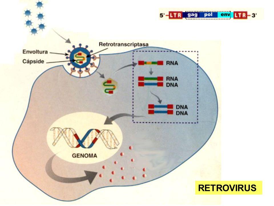 APLICACIONES ATACAR VIRUS: VIH (Sida), Poliomielitis, Hepatitis C...