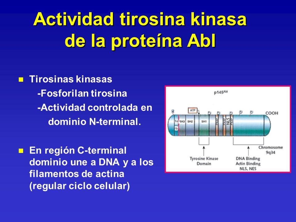 Actividad tirosina kinasa de la proteína Abl n n Tirosinas kinasas -Fosforilan tirosina -Actividad controlada en dominio N-terminal. n n En región C-t