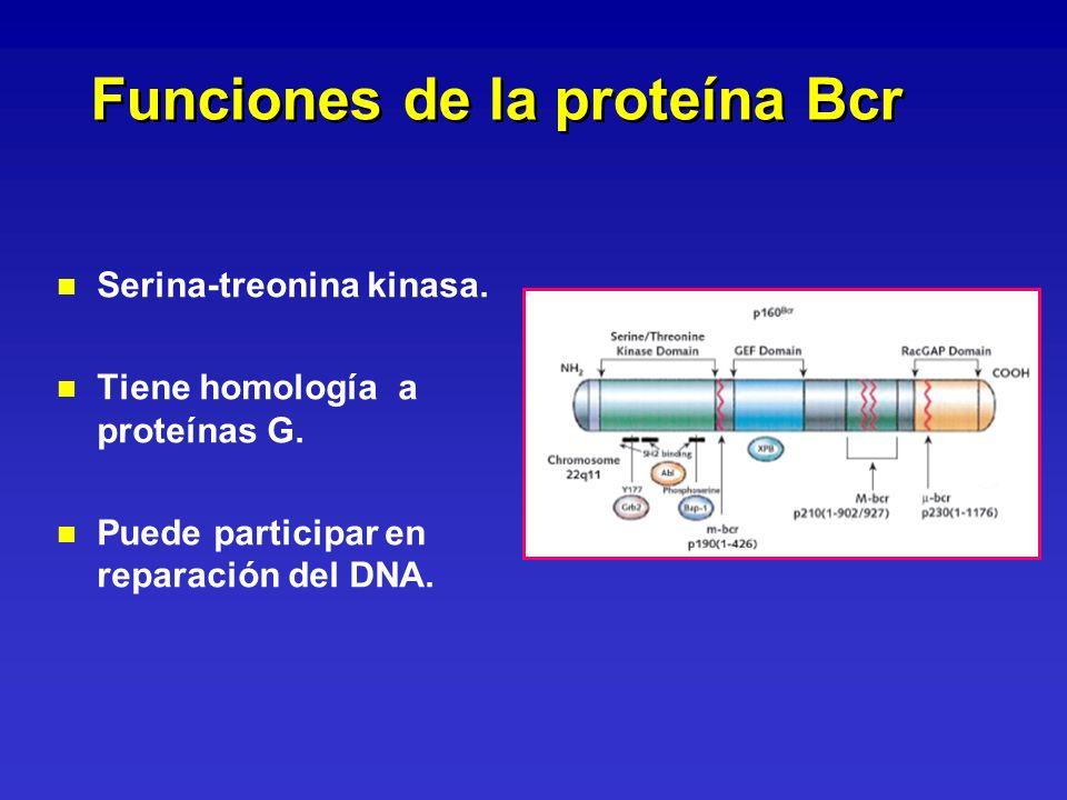 Funciones de la proteína Bcr n n Serina-treonina kinasa. n n Tiene homología a proteínas G. n n Puede participar en reparación del DNA.