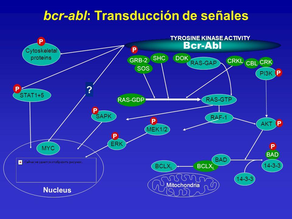 bcr-abl: Transducción de señales Bcr-Abl Cytoskeletal proteins P MYC ? Nucleus P RAS-GAP RAS-GTP SAPK P CBL CRK PI3K P BAD 14-3-3 P BCLX L 14-3-3 Mito