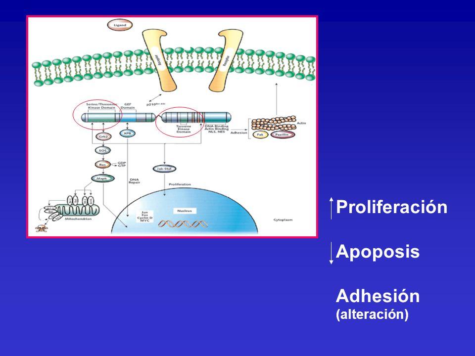 Proliferación Apoposis Adhesión (alteración)