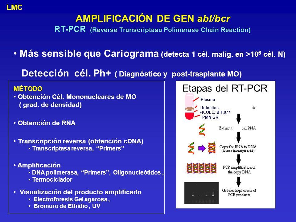 AMPLIFICACIÓN DE GEN abl/bcr RT-PCR (Reverse Transcriptasa Polimerase Chain Reaction) Más sensible que Cariograma (detecta 1 cél. malig. en >10 6 cél.