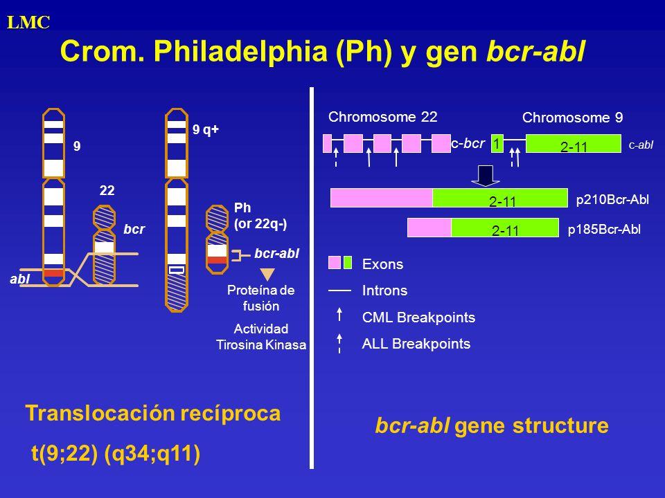 Crom. Philadelphia (Ph) y gen bcr-abl LMC bcr-abl abl Proteína de fusión Actividad Tirosina Kinasa 22 bcr Ph (or 22q-) 9 9 q+ 1 p210Bcr-Abl p185Bcr-Ab