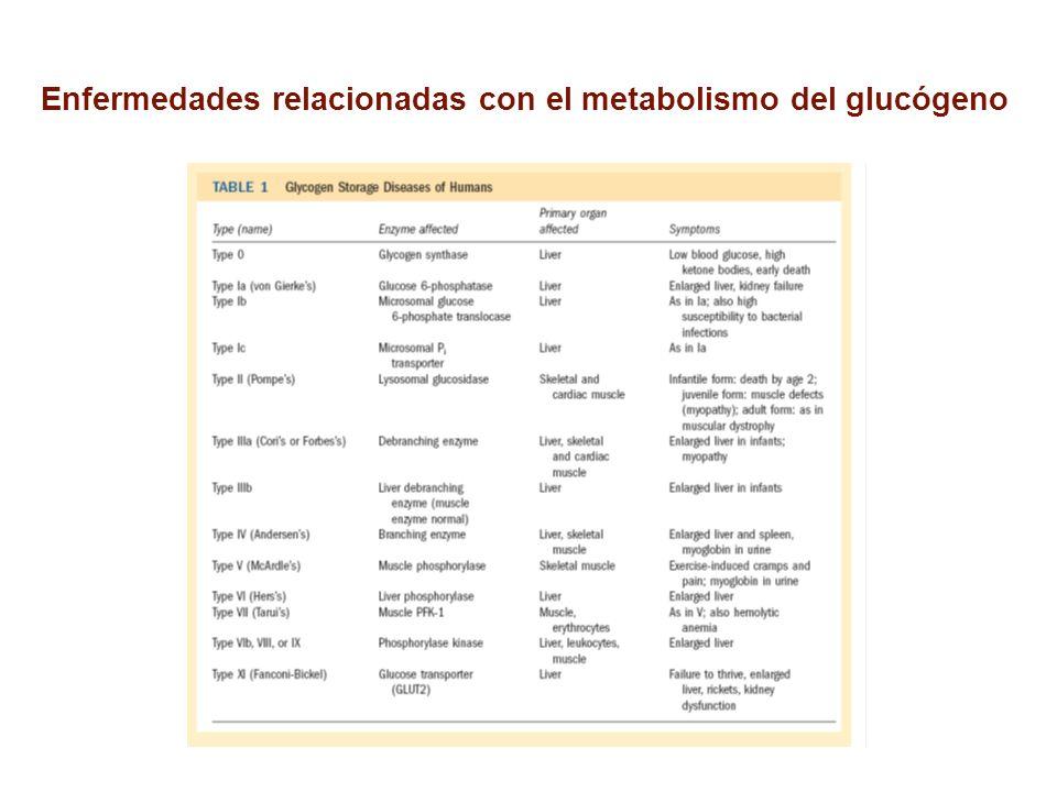 Enfermedades relacionadas con el metabolismo del glucógeno