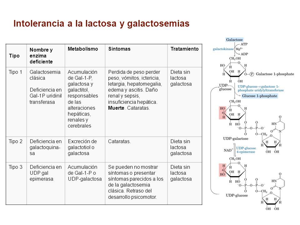 Tipo Nombre y enzima deficiente MetabolismoSíntomasTratamiento Tipo 1Galactosemia clásica Deficiencia en Gal-1P uridinil transferasa Acumulación de Ga