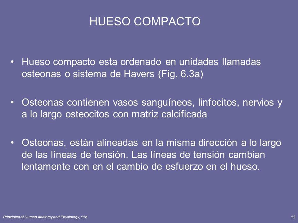 Principles of Human Anatomy and Physiology, 11e13 HUESO COMPACTO Hueso compacto esta ordenado en unidades llamadas osteonas o sistema de Havers (Fig.
