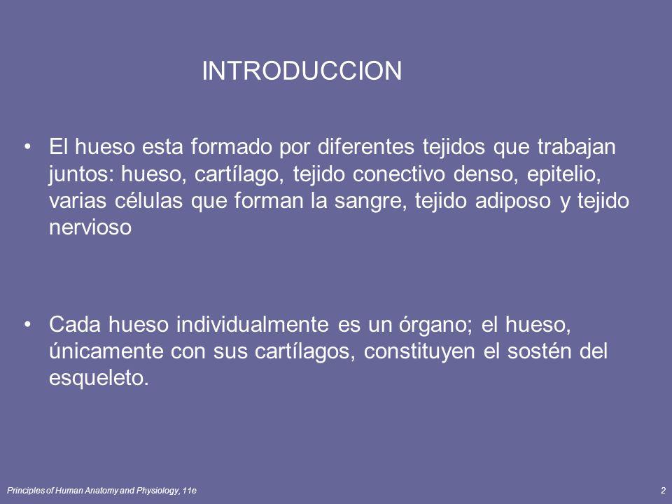 Principles of Human Anatomy and Physiology, 11e2 INTRODUCCION El hueso esta formado por diferentes tejidos que trabajan juntos: hueso, cartílago, teji
