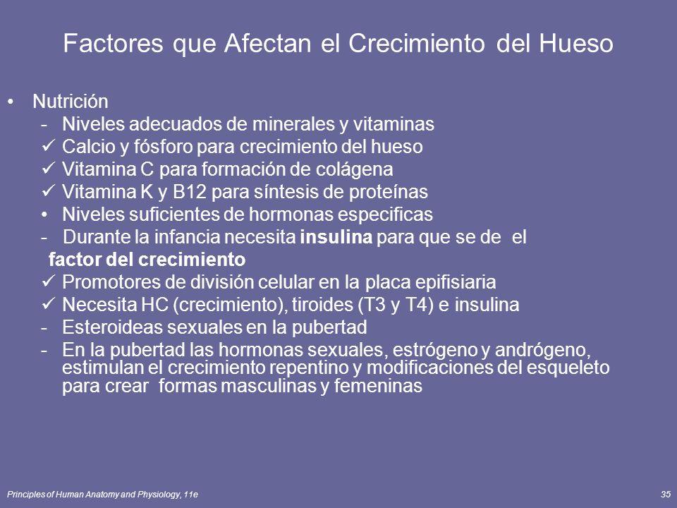 Principles of Human Anatomy and Physiology, 11e35 Factores que Afectan el Crecimiento del Hueso Nutrición -Niveles adecuados de minerales y vitaminas