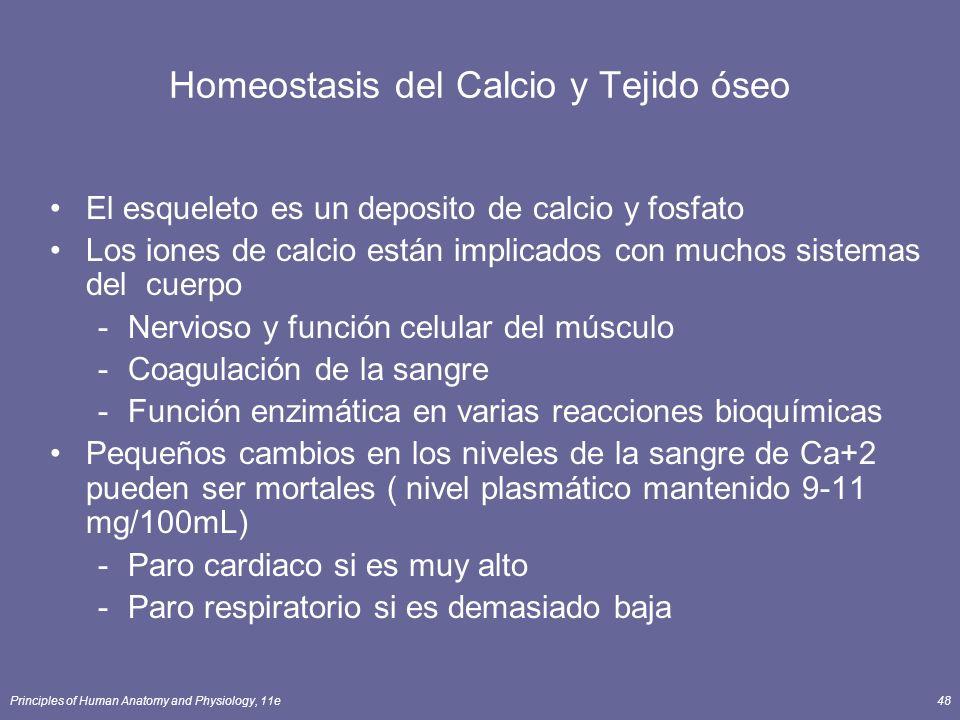 Principles of Human Anatomy and Physiology, 11e48 Homeostasis del Calcio y Tejido óseo El esqueleto es un deposito de calcio y fosfato Los iones de ca