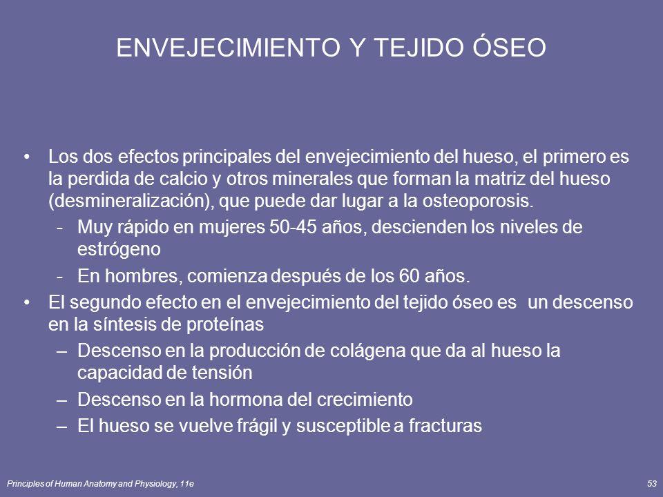 Principles of Human Anatomy and Physiology, 11e53 ENVEJECIMIENTO Y TEJIDO ÓSEO Los dos efectos principales del envejecimiento del hueso, el primero es