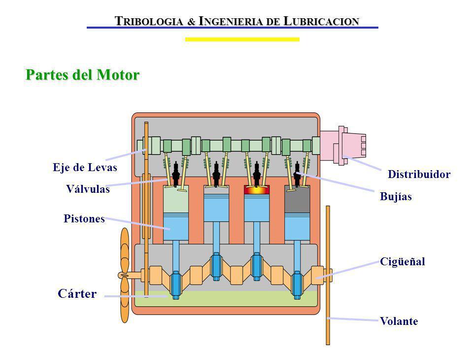 Partes del Motor Volante Distribuidor Cigüeñal Bujías Pistones Eje de Levas Válvulas Cárter T RIBOLOGIA & I NGENIERIA DE L UBRICACION