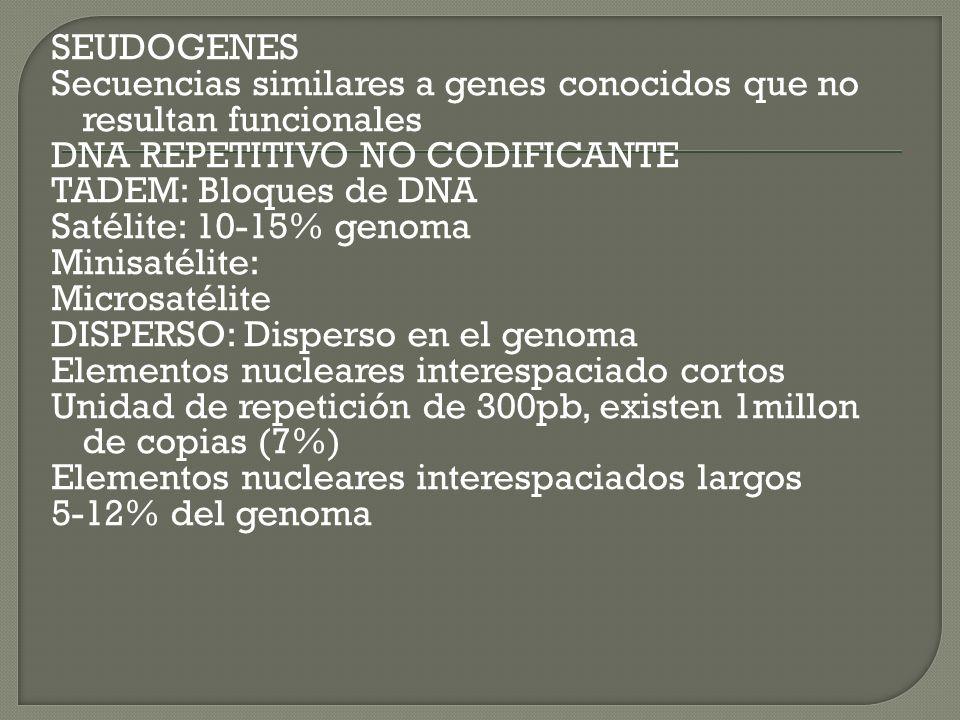 SEUDOGENES Secuencias similares a genes conocidos que no resultan funcionales DNA REPETITIVO NO CODIFICANTE TADEM: Bloques de DNA Satélite: 10-15% gen