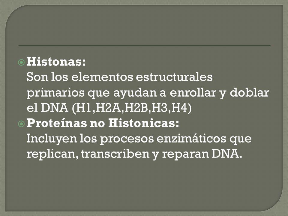 Histonas: Son los elementos estructurales primarios que ayudan a enrollar y doblar el DNA (H1,H2A,H2B,H3,H4) Proteínas no Histonicas: Incluyen los pro