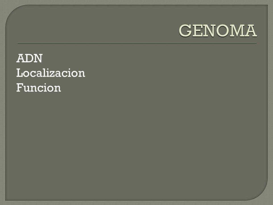 ADN Localizacion Funcion