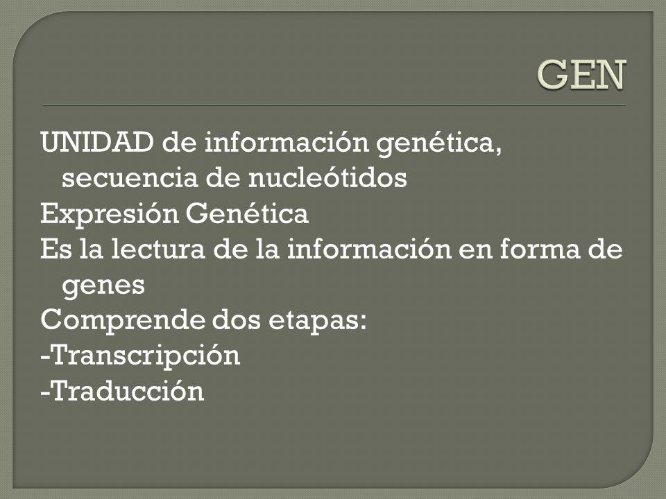 UNIDAD de información genética, secuencia de nucleótidos Expresión Genética Es la lectura de la información en forma de genes Comprende dos etapas: -T