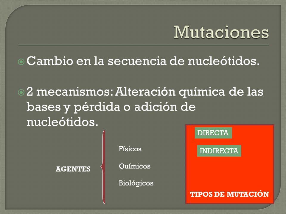 Cambio en la secuencia de nucleótidos. 2 mecanismos: Alteración química de las bases y pérdida o adición de nucleótidos. AGENTES Físicos Químicos Biol