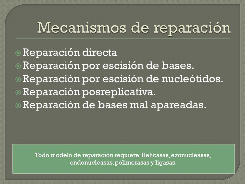 Reparación directa Reparación por escisión de bases. Reparación por escisión de nucleótidos. Reparación posreplicativa. Reparación de bases mal aparea
