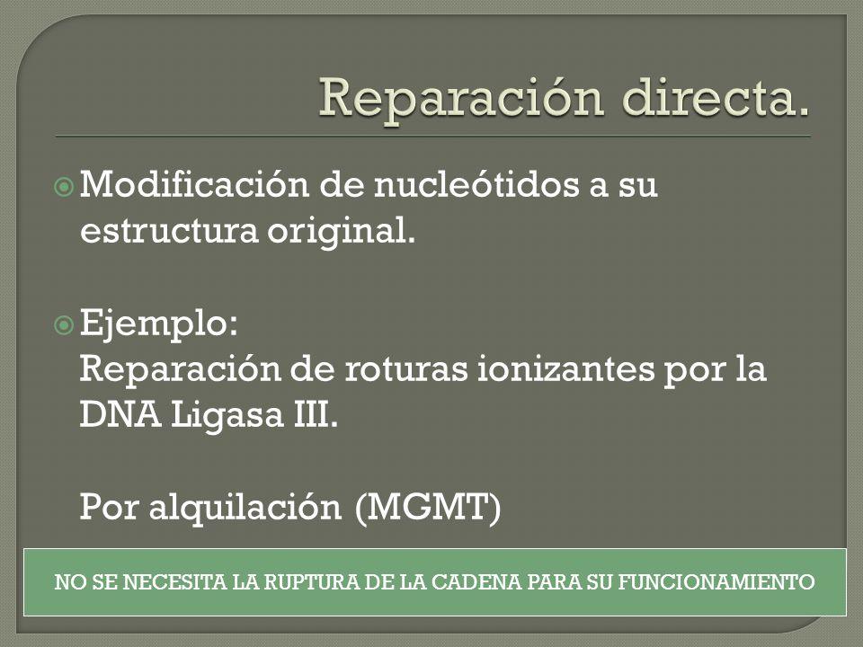 Modificación de nucleótidos a su estructura original. Ejemplo: Reparación de roturas ionizantes por la DNA Ligasa III. Por alquilación (MGMT) NO SE NE