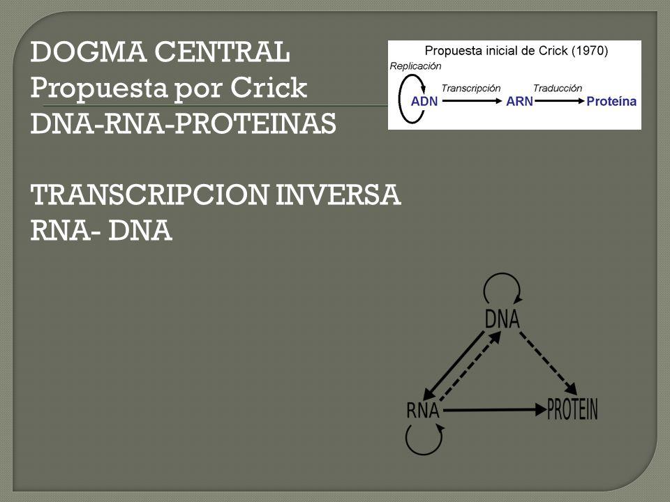 Histonas: Son los elementos estructurales primarios que ayudan a enrollar y doblar el DNA (H1,H2A,H2B,H3,H4) Proteínas no Histonicas: Incluyen los procesos enzimáticos que replican, transcriben y reparan DNA.
