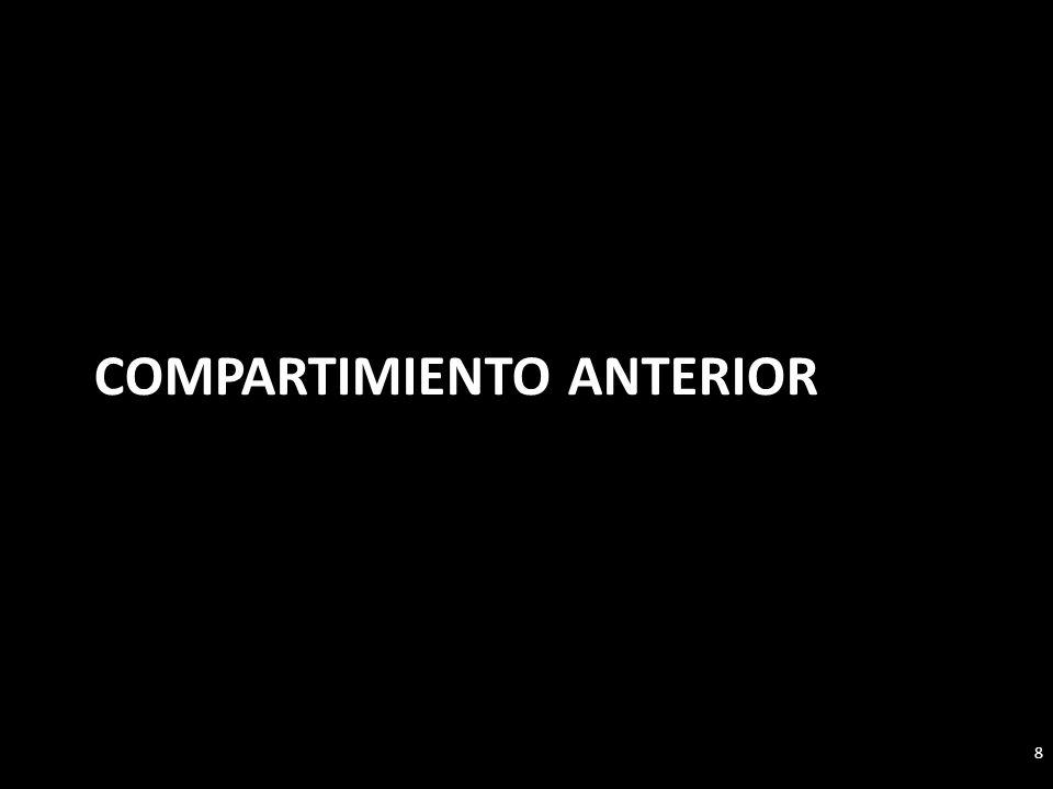 COMPARTIMIENTO APICAL 19