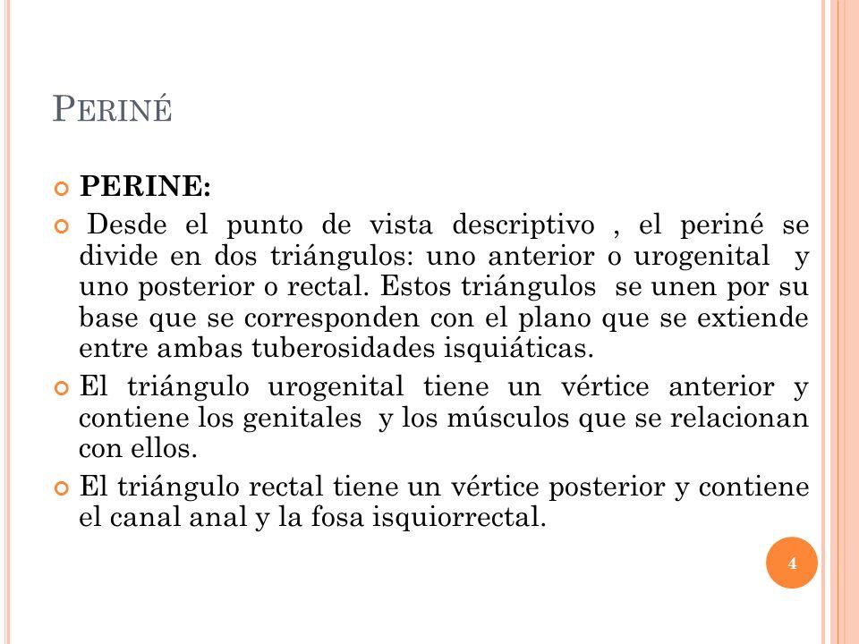 P ERINÉ PERINE: Desde el punto de vista descriptivo, el periné se divide en dos triángulos: uno anterior o urogenital y uno posterior o rectal. Estos