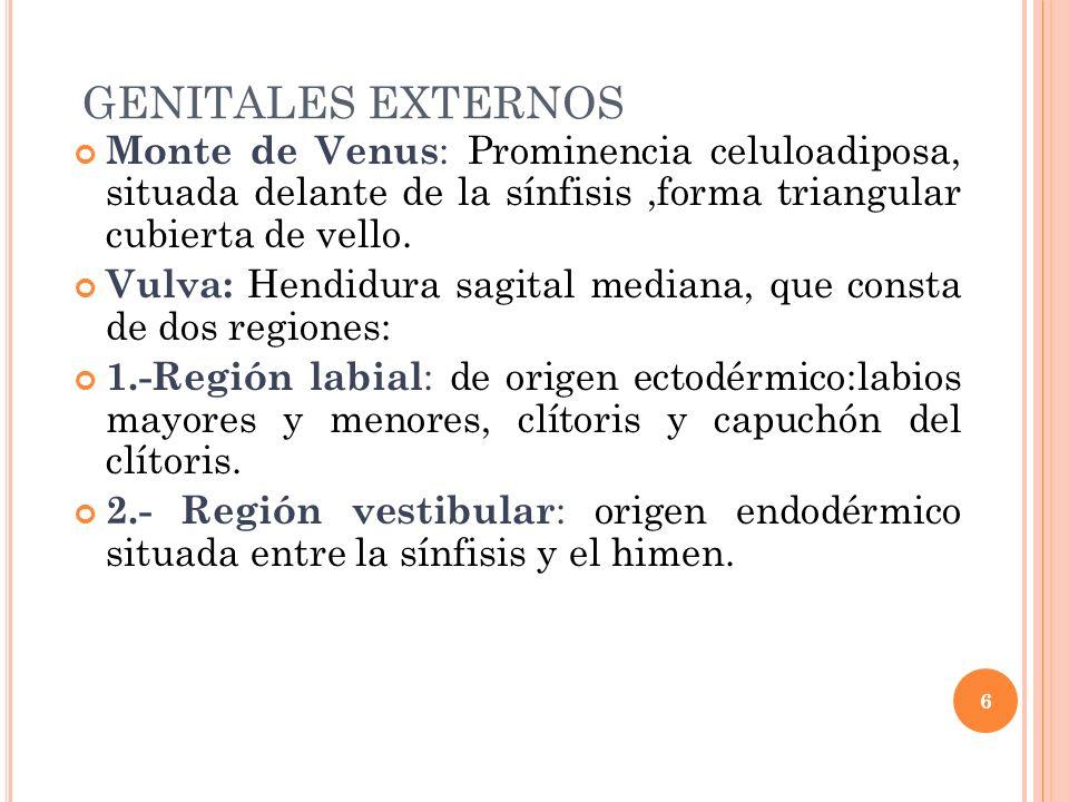 GENITALES EXTERNOS Monte de Venus : Prominencia celuloadiposa, situada delante de la sínfisis,forma triangular cubierta de vello. Vulva: Hendidura sag