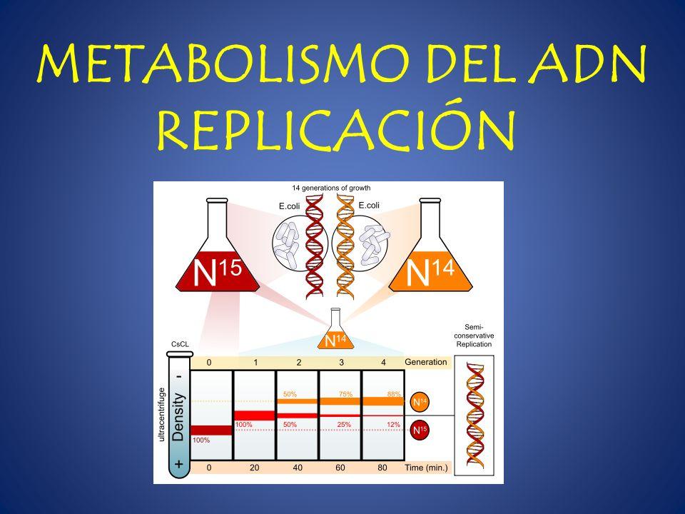 METABOLISMO DEL ADN REPLICACIÓN