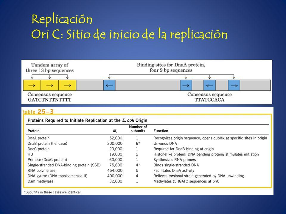 Replicación Ori C: Sitio de inicio de la replicación