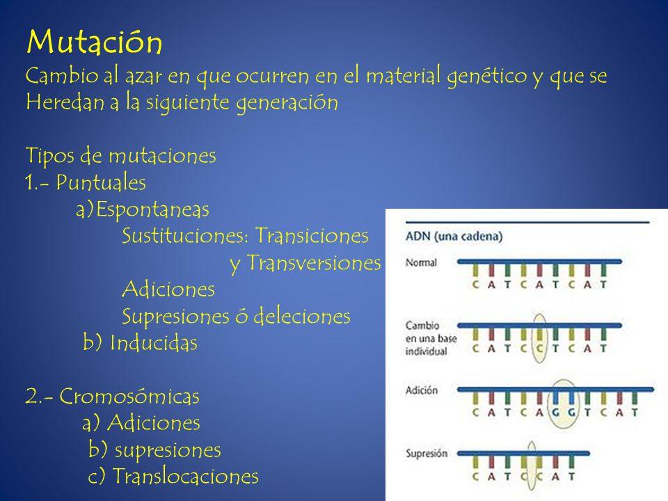 Cambio al azar en que ocurren en el material genético y que se Heredan a la siguiente generación Tipos de mutaciones 1.- Puntuales a)Espontaneas Susti