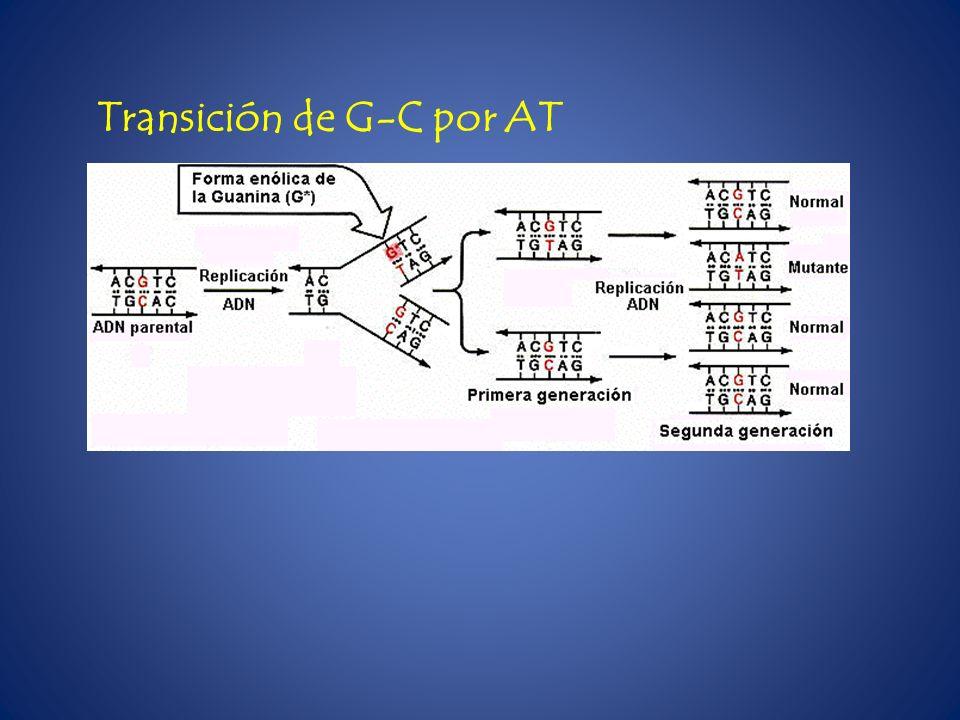 Transición de G-C por AT