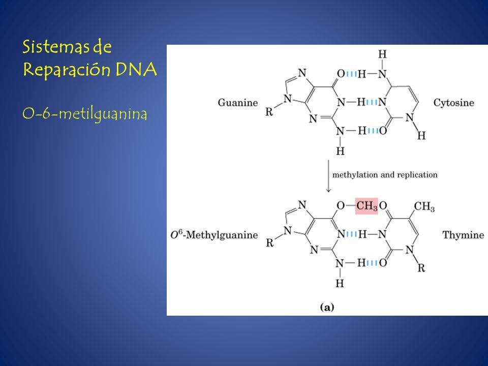 Sistemas de Reparación DNA O-6-metilguanina