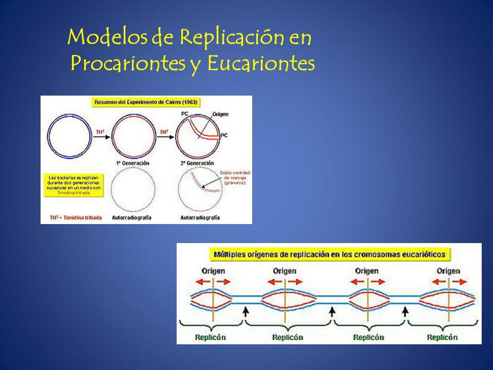 Modelos de Replicación en Procariontes y Eucariontes