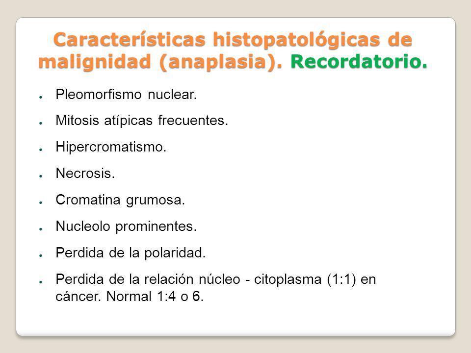 Características histopatológicas de malignidad (anaplasia). Recordatorio. Pleomorfismo nuclear. Mitosis atípicas frecuentes. Hipercromatismo. Necrosis