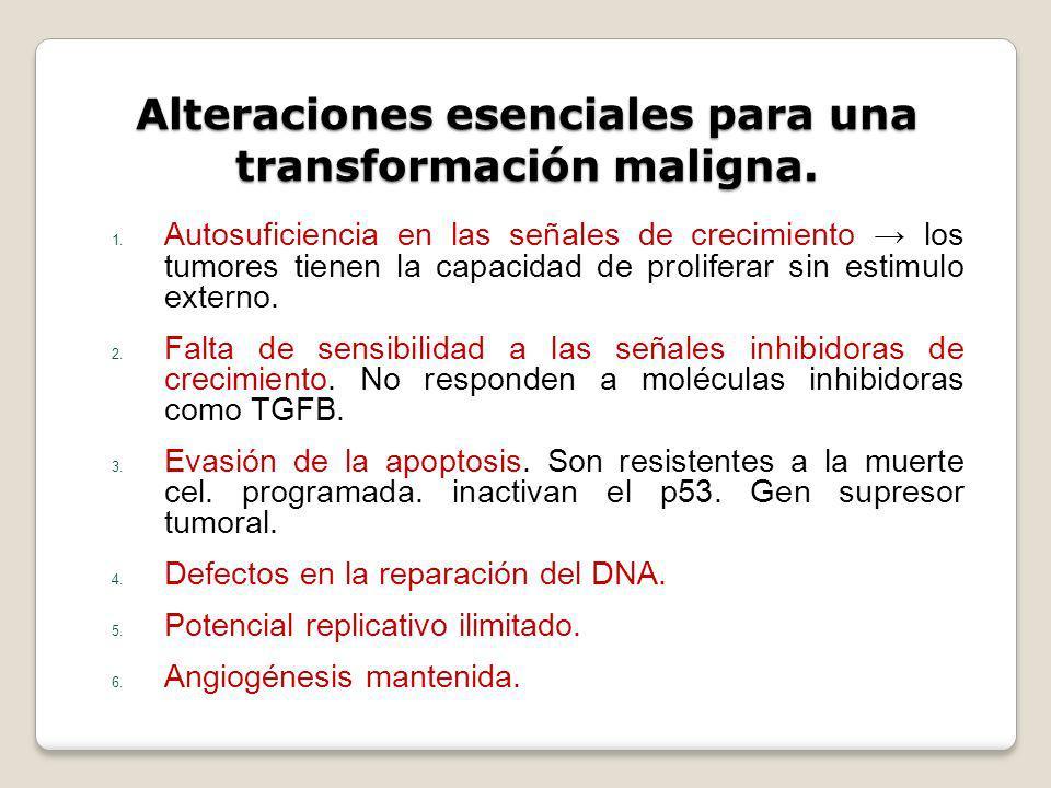 Alteraciones esenciales para una transformación maligna. 1. Autosuficiencia en las señales de crecimiento los tumores tienen la capacidad de prolifera