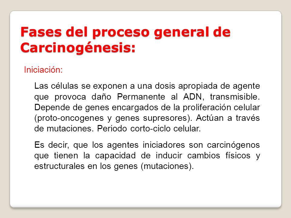 Fases del proceso general de Carcinogénesis: Iniciación: Las células se exponen a una dosis apropiada de agente que provoca daño Permanente al ADN, tr