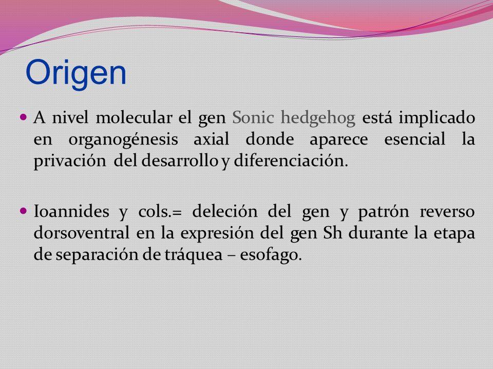 Origen A nivel molecular el gen Sonic hedgehog está implicado en organogénesis axial donde aparece esencial la privación del desarrollo y diferenciaci