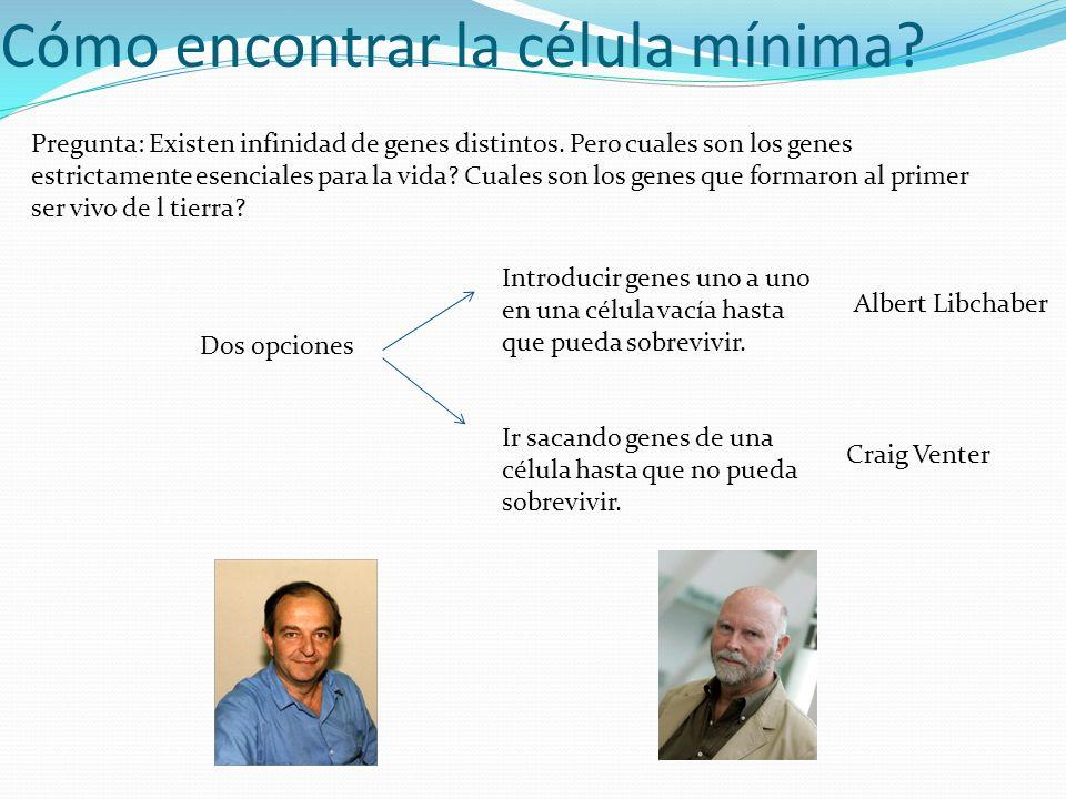 Cómo encontrar la célula mínima? Pregunta: Existen infinidad de genes distintos. Pero cuales son los genes estrictamente esenciales para la vida? Cual