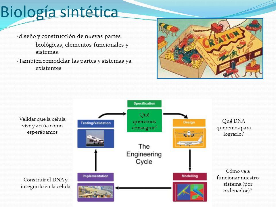 Biología sintética -diseño y construcción de nuevas partes biológicas, elementos funcionales y sistemas. -También remodelar las partes y sistemas ya e