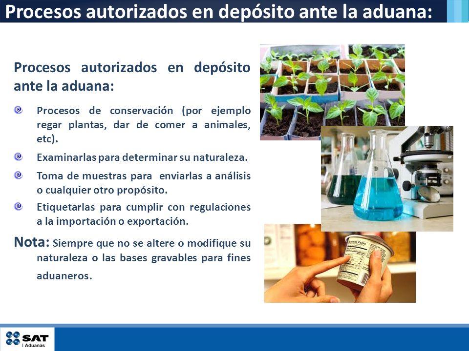 Procesos autorizados en depósito ante la aduana: Procesos de conservación (por ejemplo regar plantas, dar de comer a animales, etc). Examinarlas para