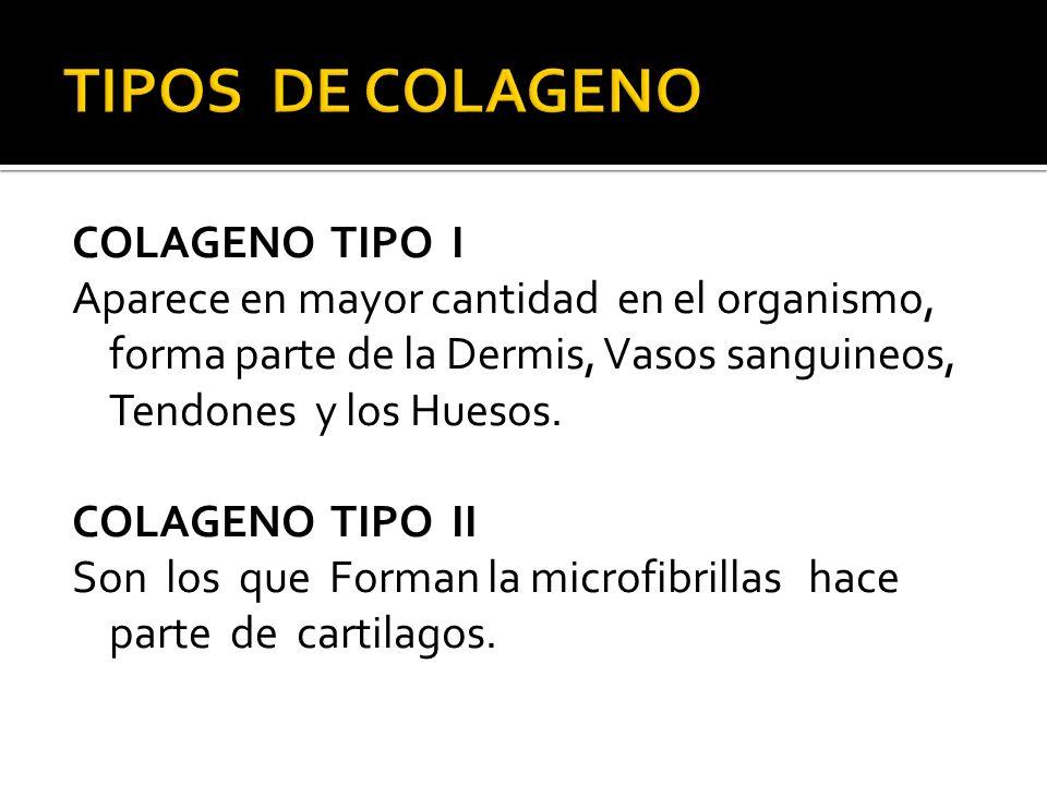 COLAGENO TIPO I Aparece en mayor cantidad en el organismo, forma parte de la Dermis, Vasos sanguineos, Tendones y los Huesos. COLAGENO TIPO II Son los