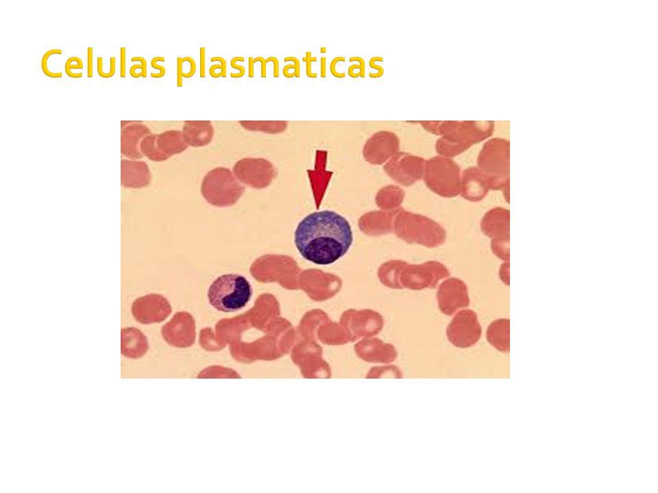 Celulas plasmaticas