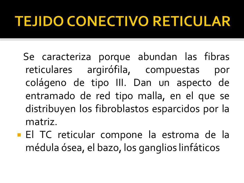 Se caracteriza porque abundan las fibras reticulares argirófila, compuestas por colágeno de tipo III. Dan un aspecto de entramado de red tipo malla, e