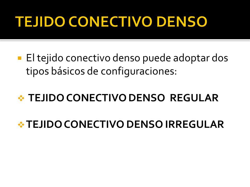El tejido conectivo denso puede adoptar dos tipos básicos de configuraciones: TEJIDO CONECTIVO DENSO REGULAR TEJIDO CONECTIVO DENSO IRREGULAR