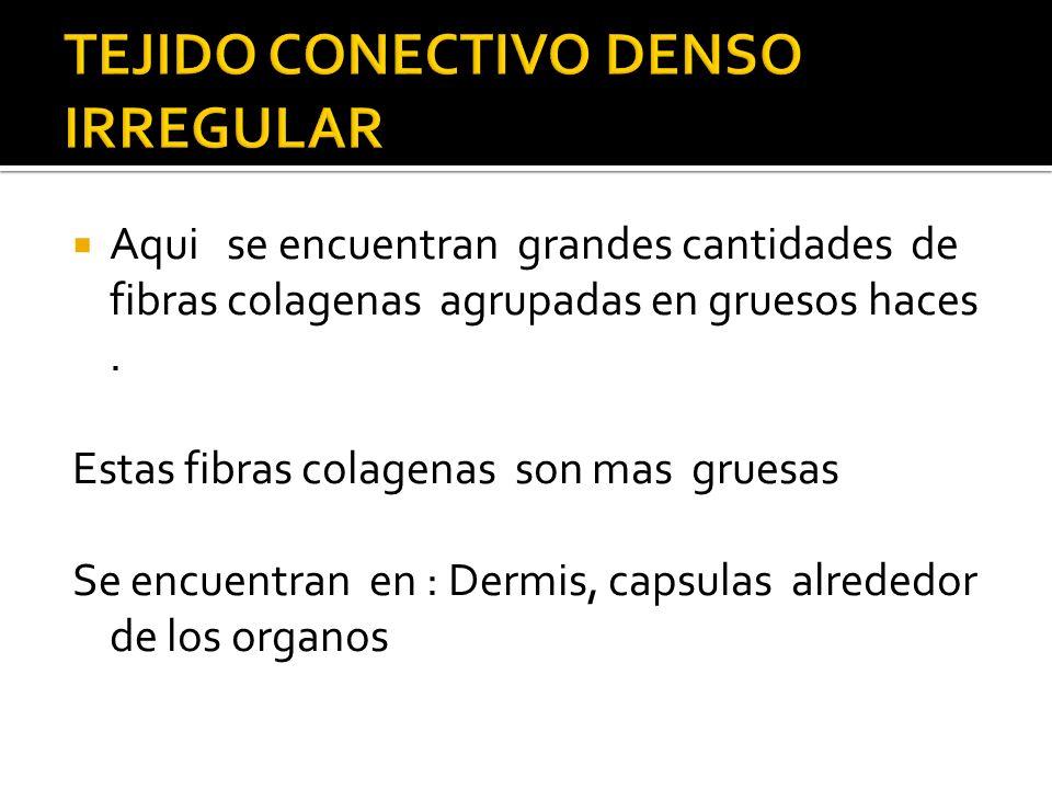 Aqui se encuentran grandes cantidades de fibras colagenas agrupadas en gruesos haces. Estas fibras colagenas son mas gruesas Se encuentran en : Dermis
