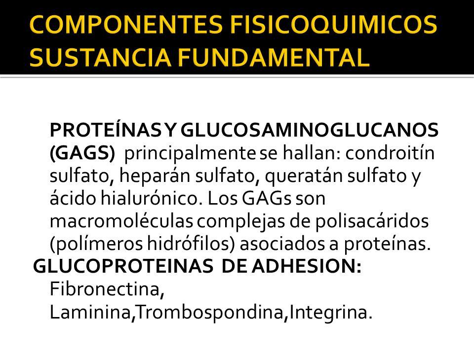 PROTEÍNAS Y GLUCOSAMINOGLUCANOS (GAGS) principalmente se hallan: condroitín sulfato, heparán sulfato, queratán sulfato y ácido hialurónico. Los GAGs s