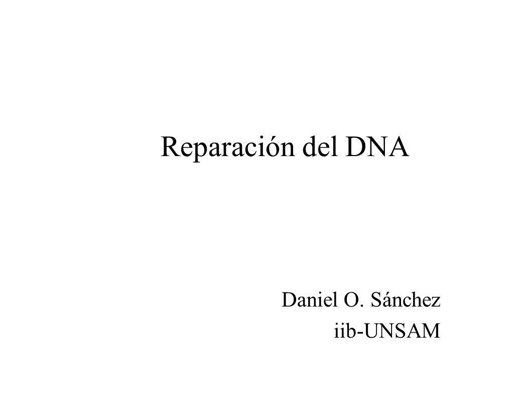 Reparación del DNA Daniel O. Sánchez iib-UNSAM